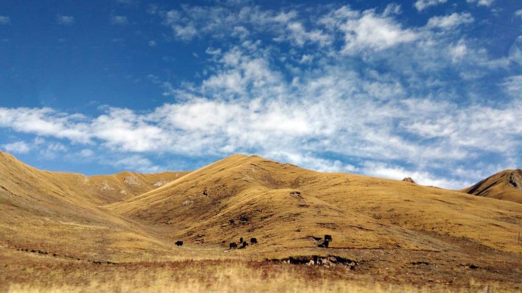 Tibetan Plateau - Yak Leather - Liberty Leather Goods